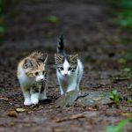 Een kitten of een oudere kat kopen?