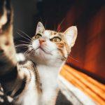 Bestel kattenluiken gemakkelijk en snel online