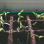 Hulp bij het werk in de tuin