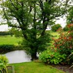 Vermijd bladluizen in je tuin